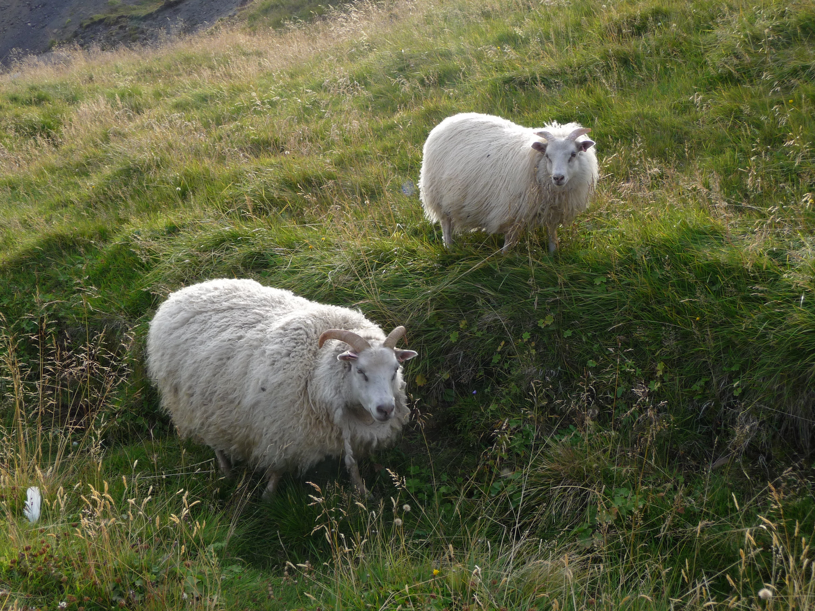 You usually see more sheep then people